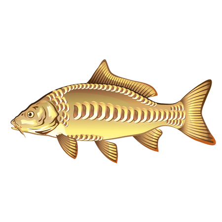 Mirror Carp Vector Art graphic design file