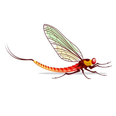 Mayfly vector water bug illustration fish food Vettoriali