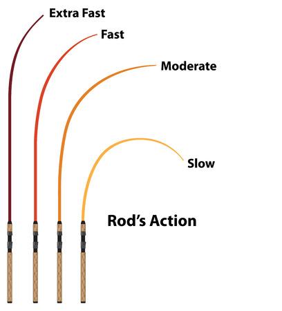 Rod action diagram characteristics vector illustration clip-art