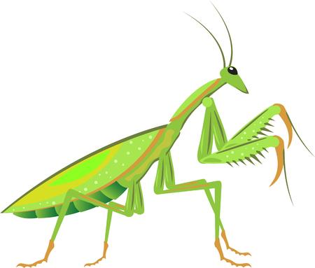 Green Mantis Vector bug critter illustration