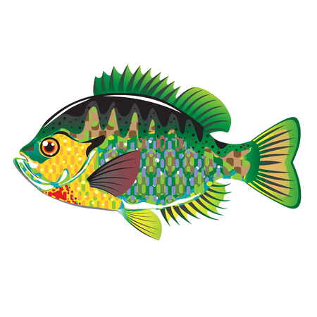 bluegill: Bluegill Panfish Vector illustration native american fish