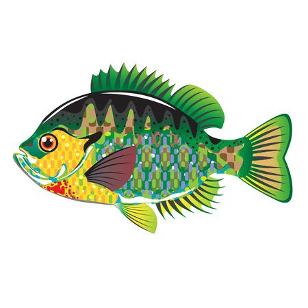 Bluegill Panfish Vector illustration native american fish