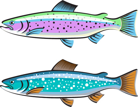 trout: Rainbow and Lake trout vector illustration clip-art image
