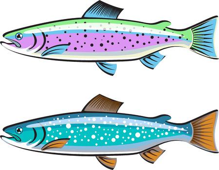 Rainbow and Lake trout vector illustration clip-art image Banco de Imagens - 68044488
