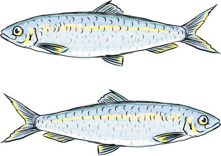 Herring fish vector sketch illustration clip-art image