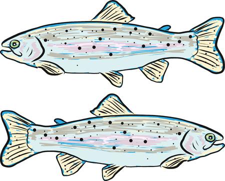 Rainbow trout vector illustration clip-art fish image