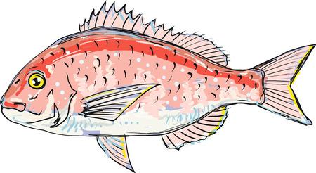 Croquis de mer rouge broche vector illustration clipart