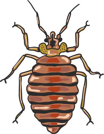 Bed bug vector clip-art illustration image