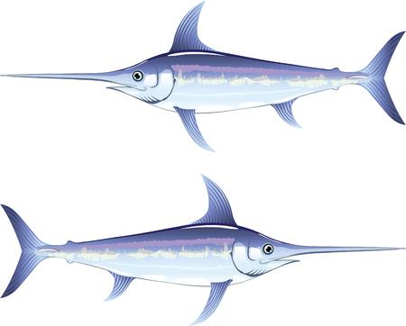 Zwaardvis vector illustratie clip-art afbeelding