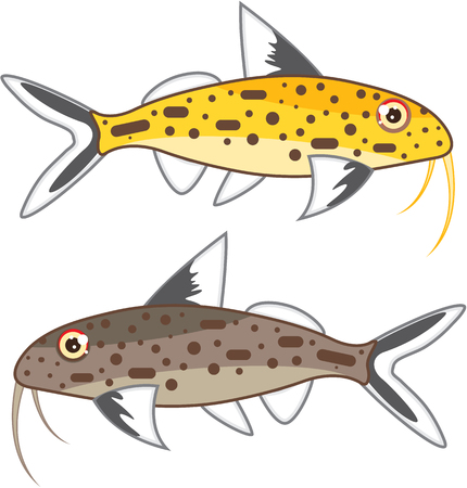 Tiny Catfish illustration of aquarium fish image