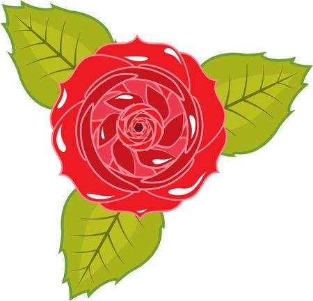 Rose Illustration Clip-Art Artwork Grafik Standard-Bild - 88298216