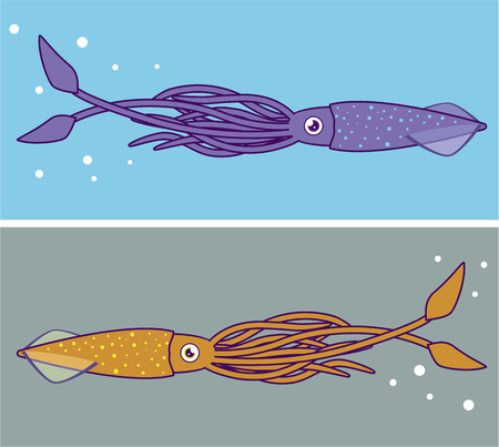 Squid illustration clip-art image artwork