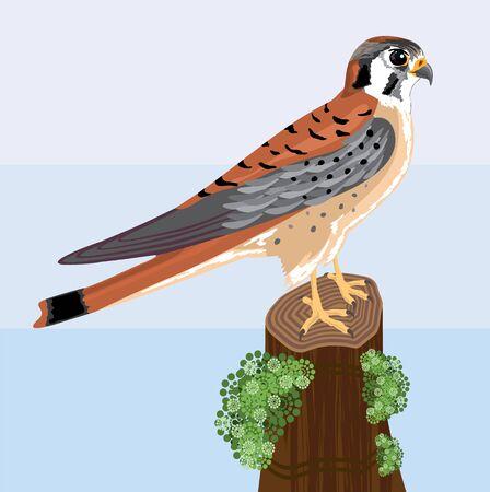 kestrel small falcon vector illustration