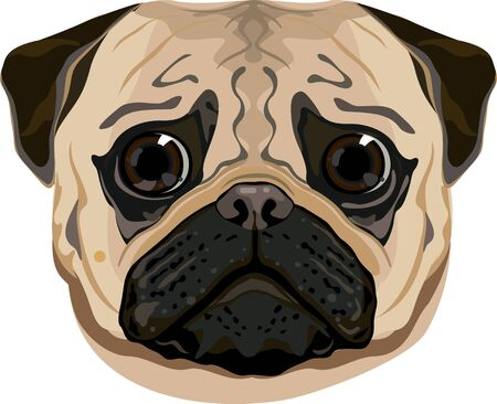 silly pug face illustration Иллюстрация
