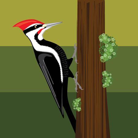 woodpecker vector illustration clip-art