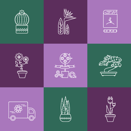 house plants: Hello spring and summer. Different types of House plants illustration.