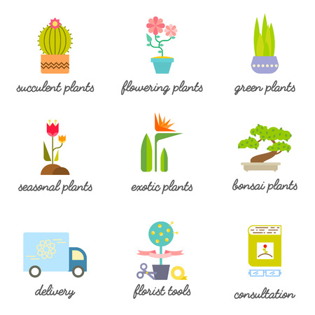 house plants: Different types of House plants illustration.