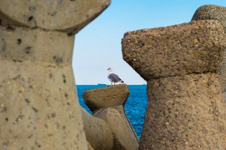 Sea gull inspects the horizon among breakwater.