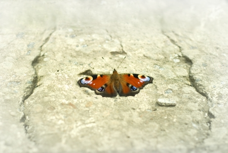 butterfly on stoned area without forest Stock Photo - 16537551