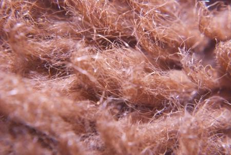 red zoomed wool under microscope Reklamní fotografie