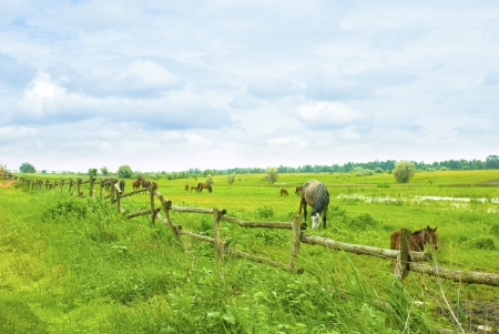 horses on green field eating grass