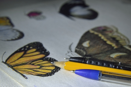 lessons: drawing butterflies  by pencils and pens on paper (drawing lessons) Stock Photo