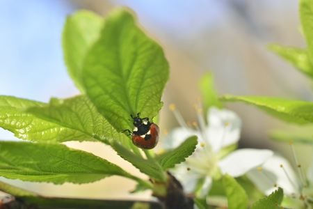 spring background (sprouts on trees, green leaves, ladybug beetle )