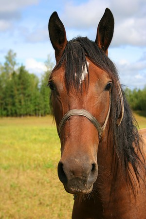 brown horse Stock Photo - 4066475