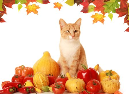 red fluffy cat with fresh vegetables photo