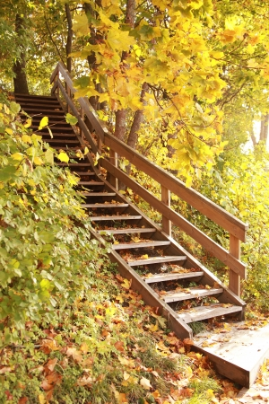 old wooden stairs in autumn forest Stock Photo
