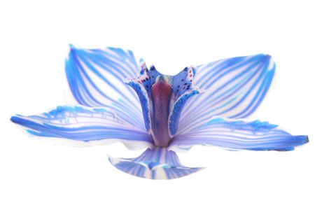 exotic blue orchid isolated on white Stock Photo