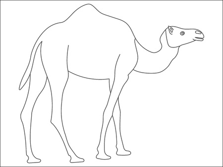 Black and white cute cartoon camel. Coloring book for the children.