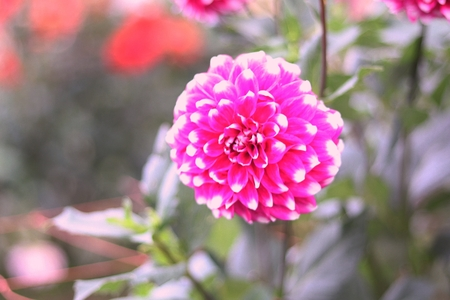 Flowers have a way to bring life to their surroundings and the more beautiful flowers we surround ourself .