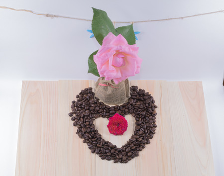 Heart of coffee beans and pink rose , starfish and white background.