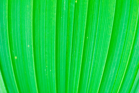 progressing: Abstract image of  fresh green leaf texture  leaves in nature with copy space .