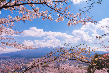 Cherry blossom sakura in spring season and Mt. fuji  on the blue sky background,the most famous in Japan to traveling.