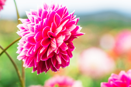 Beautiful flower blooming  in  spring day  by Macro lens .
