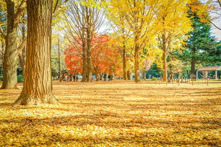 Beautiful Japan autumn leaves in Meiji Jingu Gaien Park of Tokyo , Japan. Standard-Bild