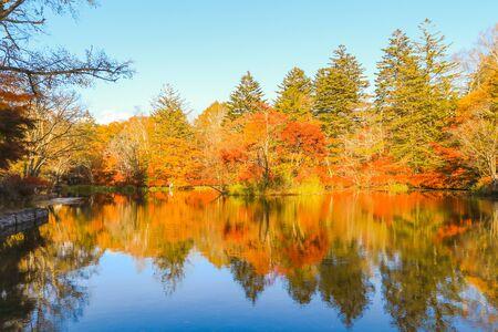 일본 나가노현 가루이자와의 구모바 연못이나 구모바 이케의 아름다운 일본 가을.