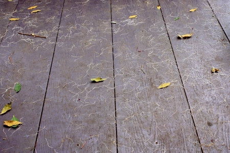 slovenly: Dirty floor