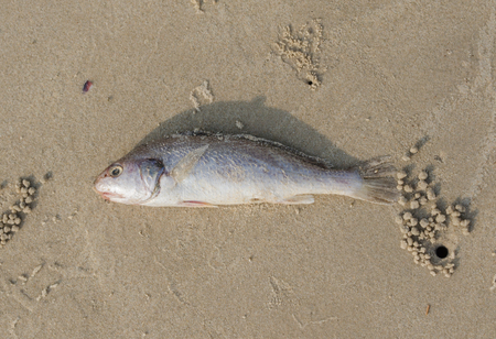 smother: Dead fish on the beach