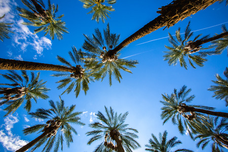 music background: Coachella Palm Trees and Clear Skies