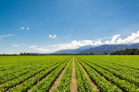 캘리포니아의 유기농 작물의 비옥 한 농업 분야