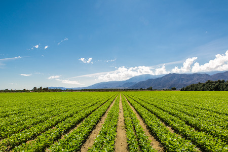 farm equipment: Fertile Agricultural Field of Organic Crops in California Stock Photo