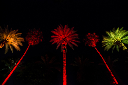 Palm Trees at Night in Miami 版權商用圖片