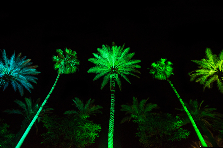 Tropical palm tree decorated with colorful lights during the night time for a holiday celebration