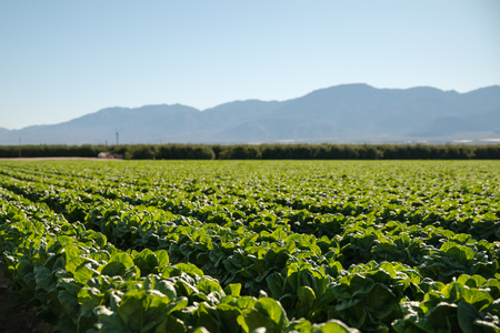 Organic Farm Land Crops In California Blue skies and multiple layers of mountains add to this organic and fertile farm land