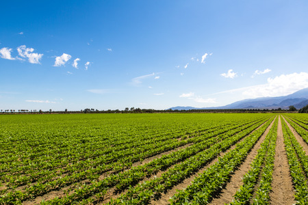 Organic vegetable well culvated in california farmland