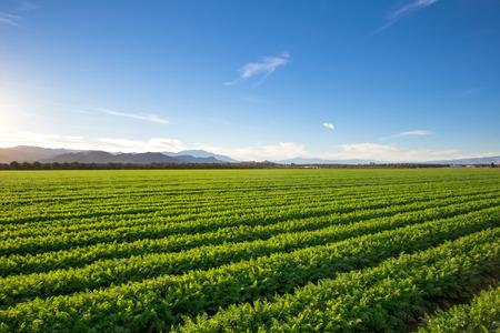 granja: Organic Farm Tierra cultivos en California Las m�ltiples capas de vista de la monta�a y la f�rtil tierra de cultivo en California. Un mont�n de colores y cielo despejado. Foto de archivo