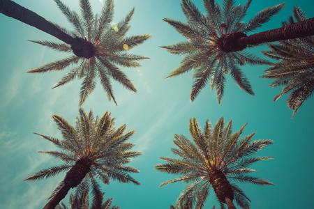 Vintage Beverly Hills captivating Palm Trees